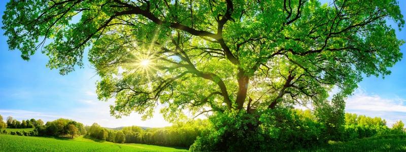 Tree_01_banner